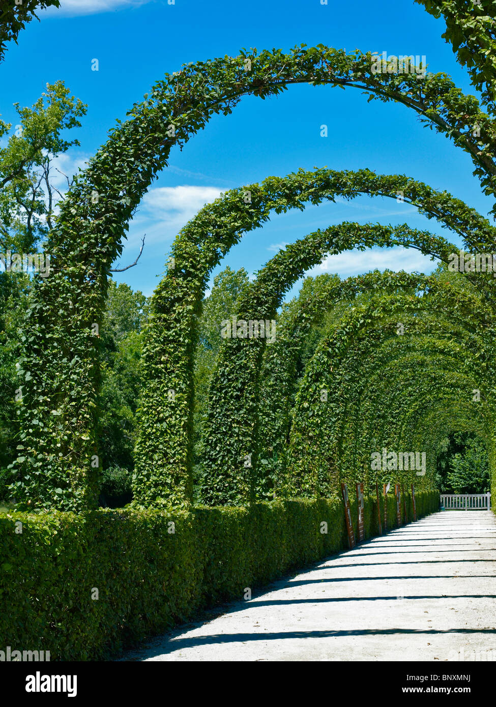 A view of the impressive clipped Hornbeams in the Renaissance Garden at Chamerolles - Stock Image