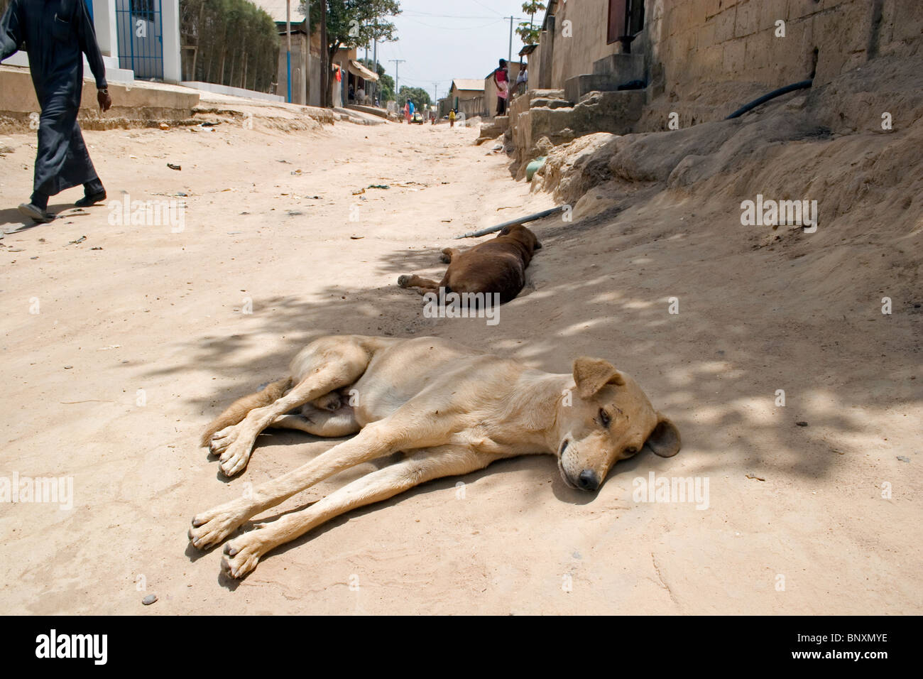 Domestic dogs resting in the shade on side of road, The Gambia - Stock Image