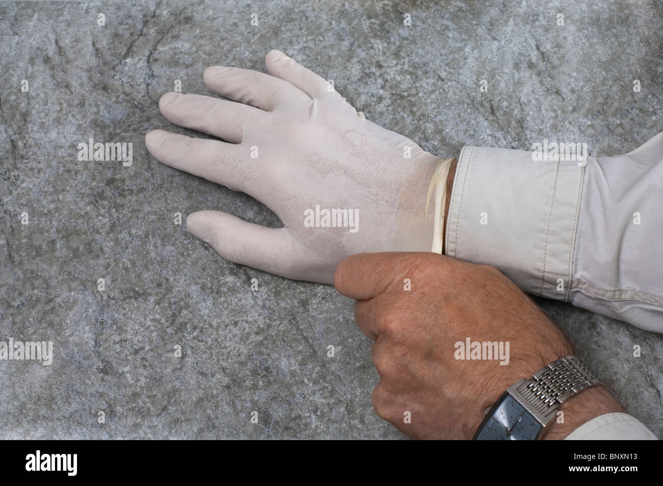 Putting on medical latex rubber gloves - Stock Image
