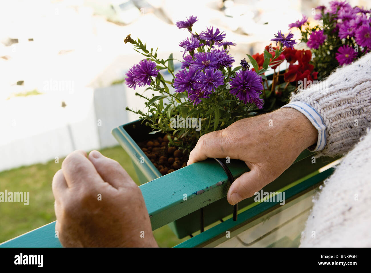 Standing on balcony, blooming flowers in window box - Stock Image