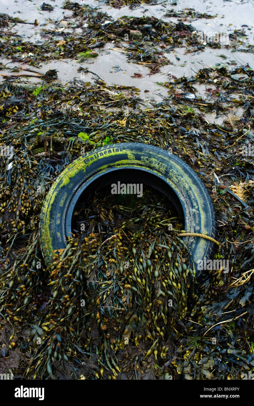 A dumped tyre makes an interseting composition with seaweed - Stock Image