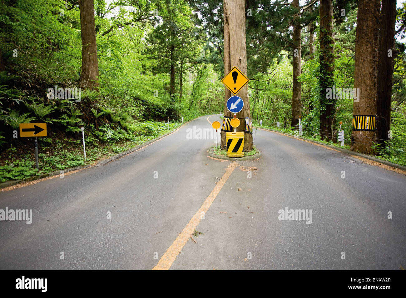 Tree growing in middle of road Stock Photo