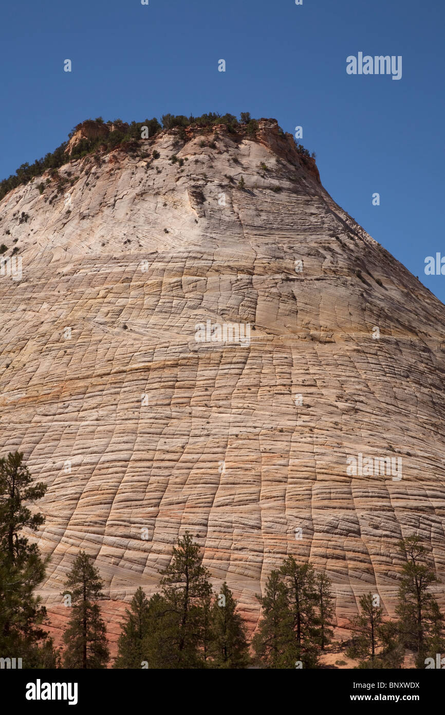 Checkerboard mesa in the Canyonlands country of Zion National Park in Utah USA - Stock Image
