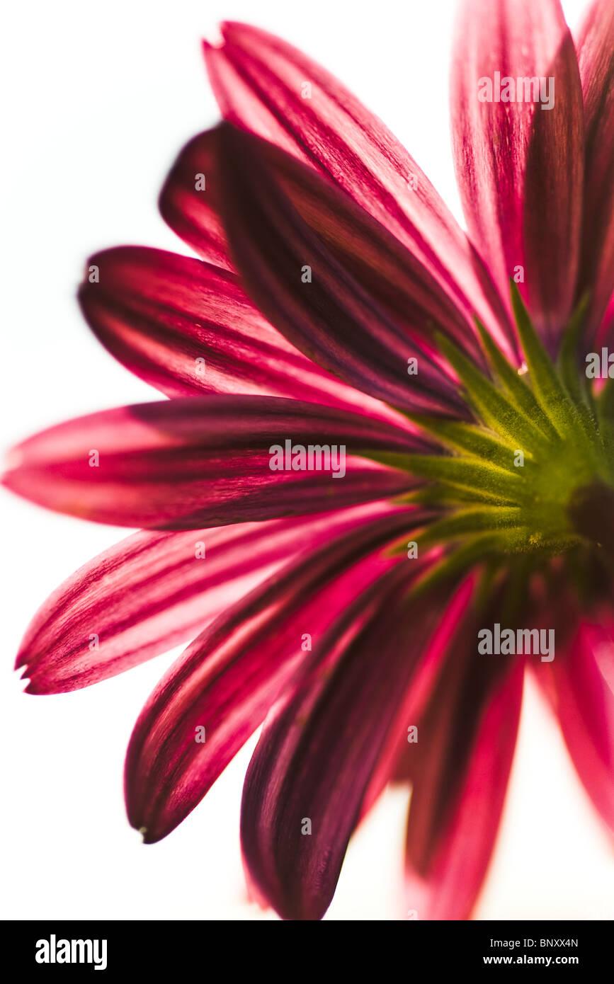 Underside of flower - Stock Image