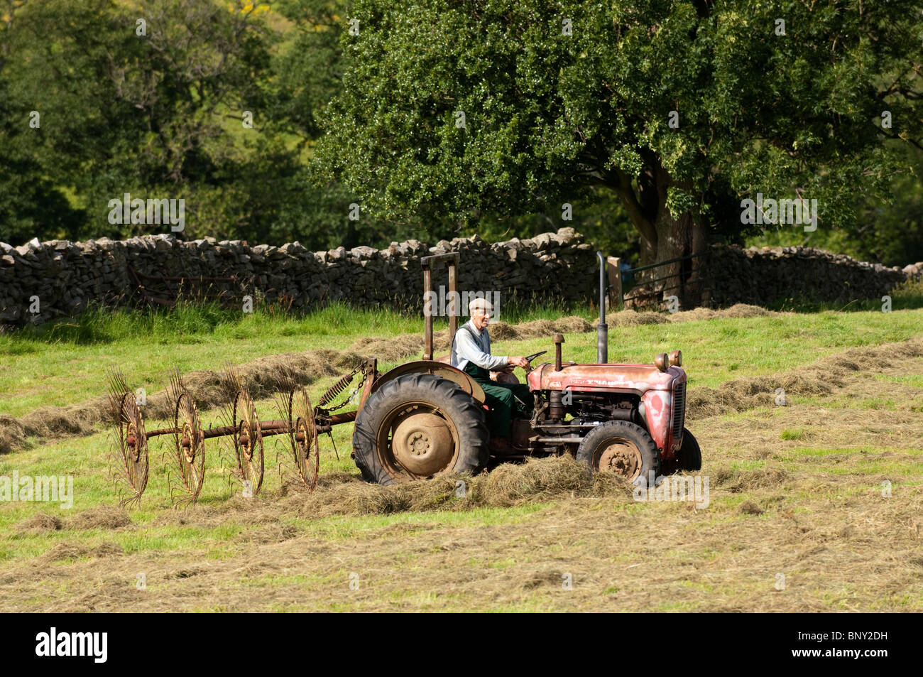 Farmer rowing up hay with an old Fergie tractor and acrobat. - Stock Image