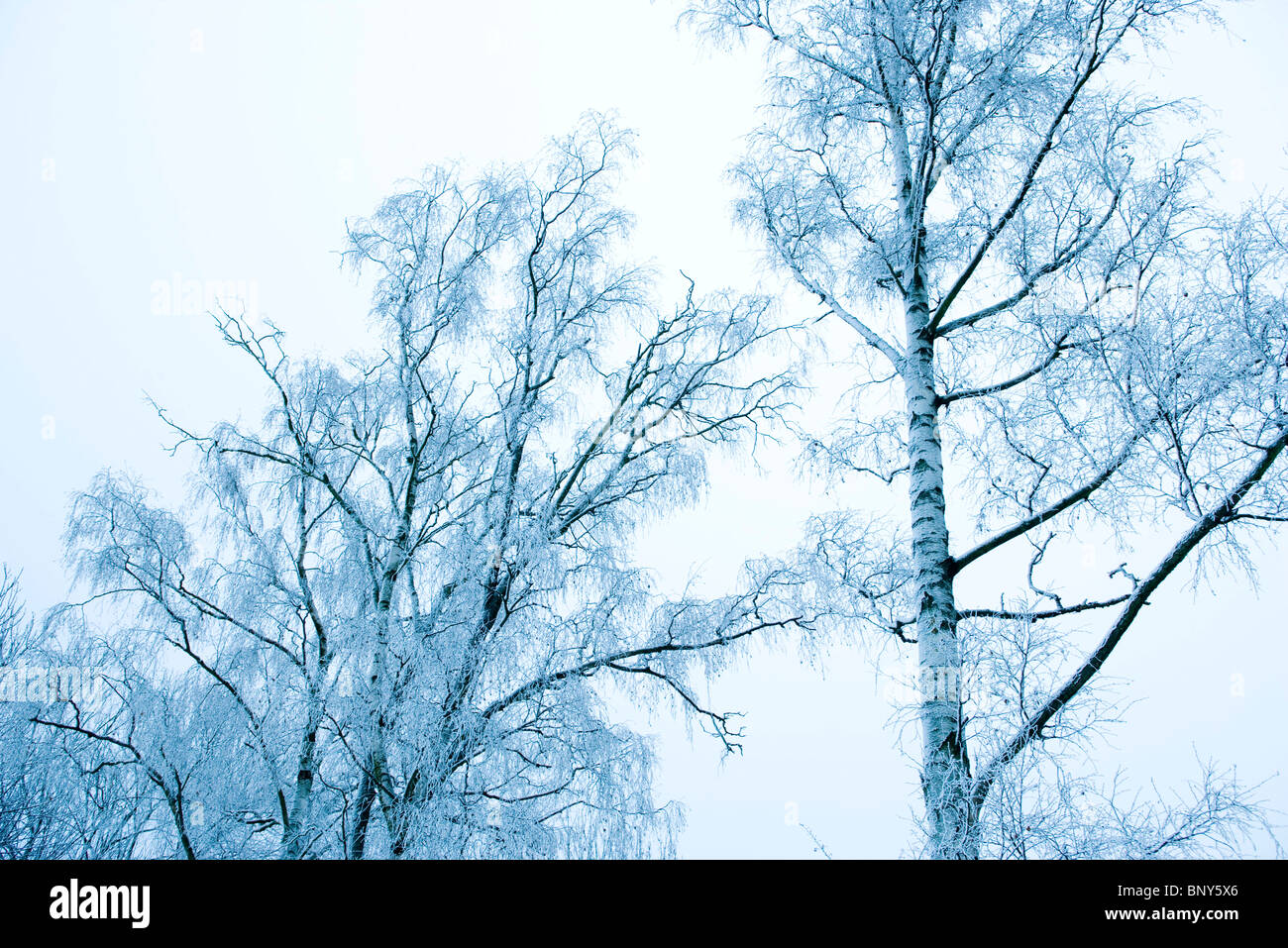 Bare trees dusted with snow - Stock Image