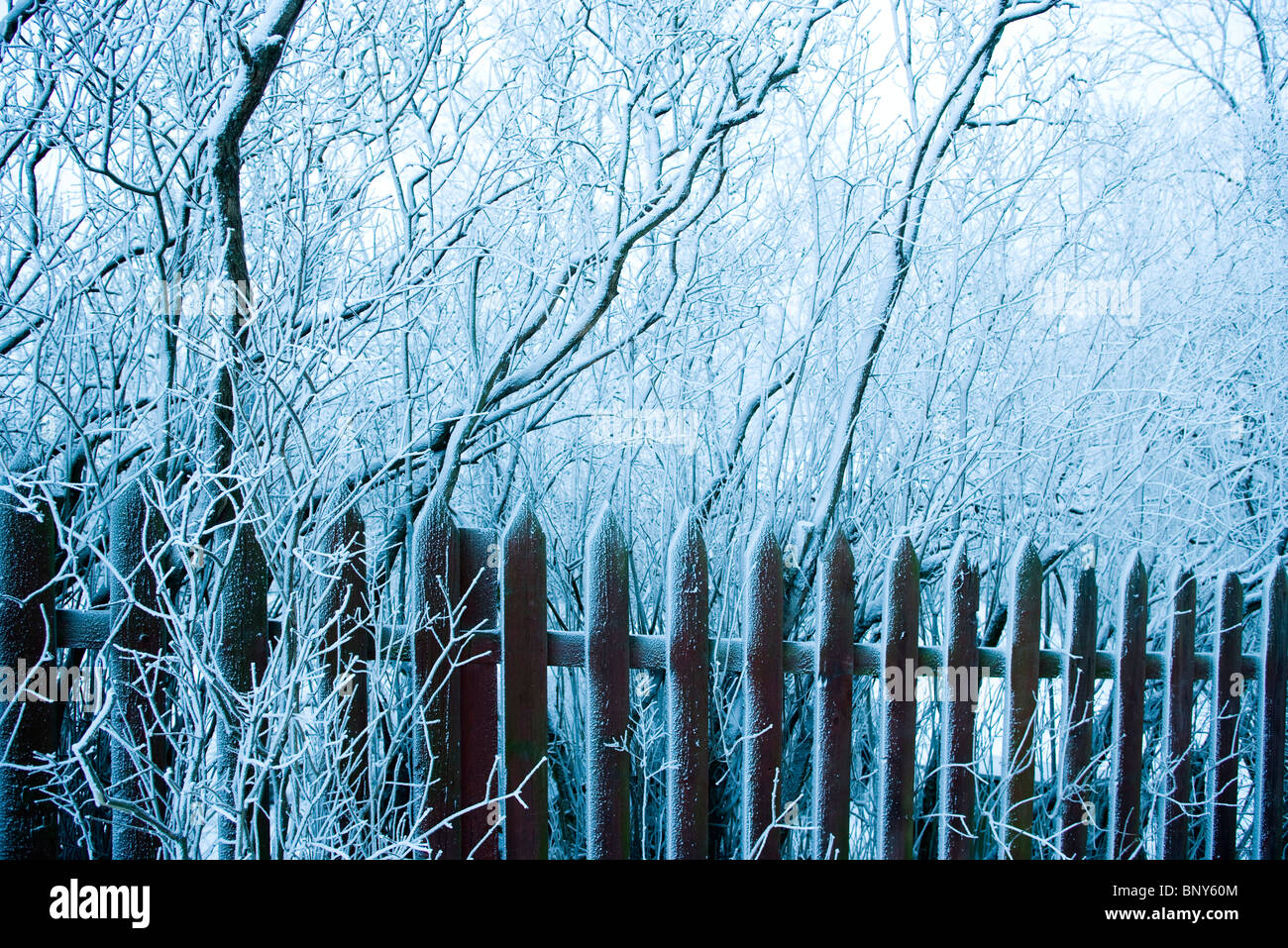Wooden fence and trees dusted with snow - Stock Image