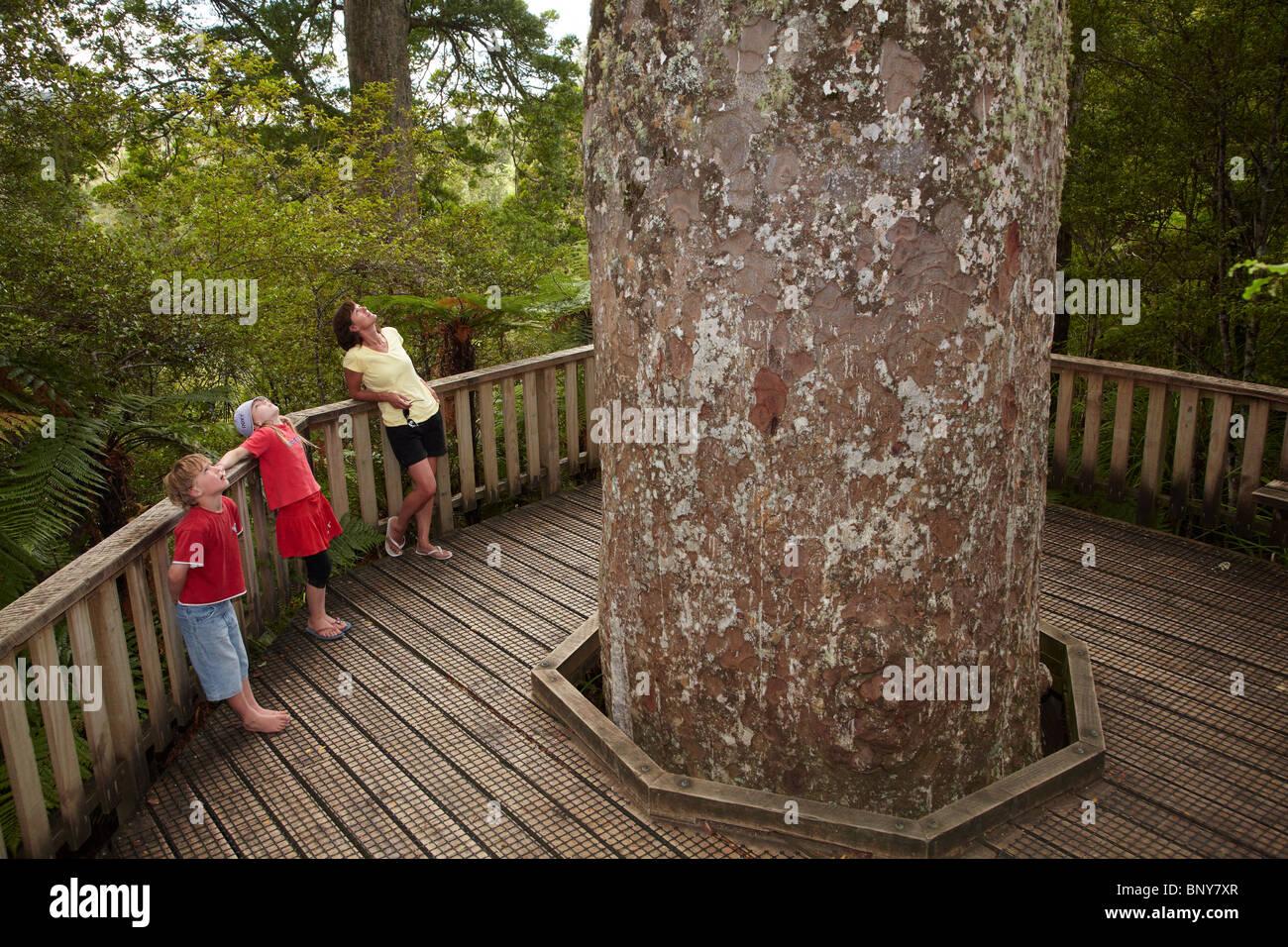 Family Visiting Giant Kauri Tree, Waiau Kauri Grove, 309 Road, Coromandel Peninsula, North Island, New Zealand - Stock Image