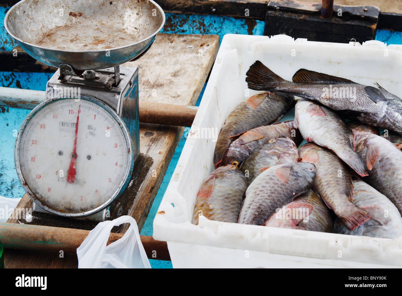 Fresh fish (Parrot fish, Vieja in Spanish) and scales on small fishing boat on beach in Las Palmas, Gran Canaria. - Stock Image
