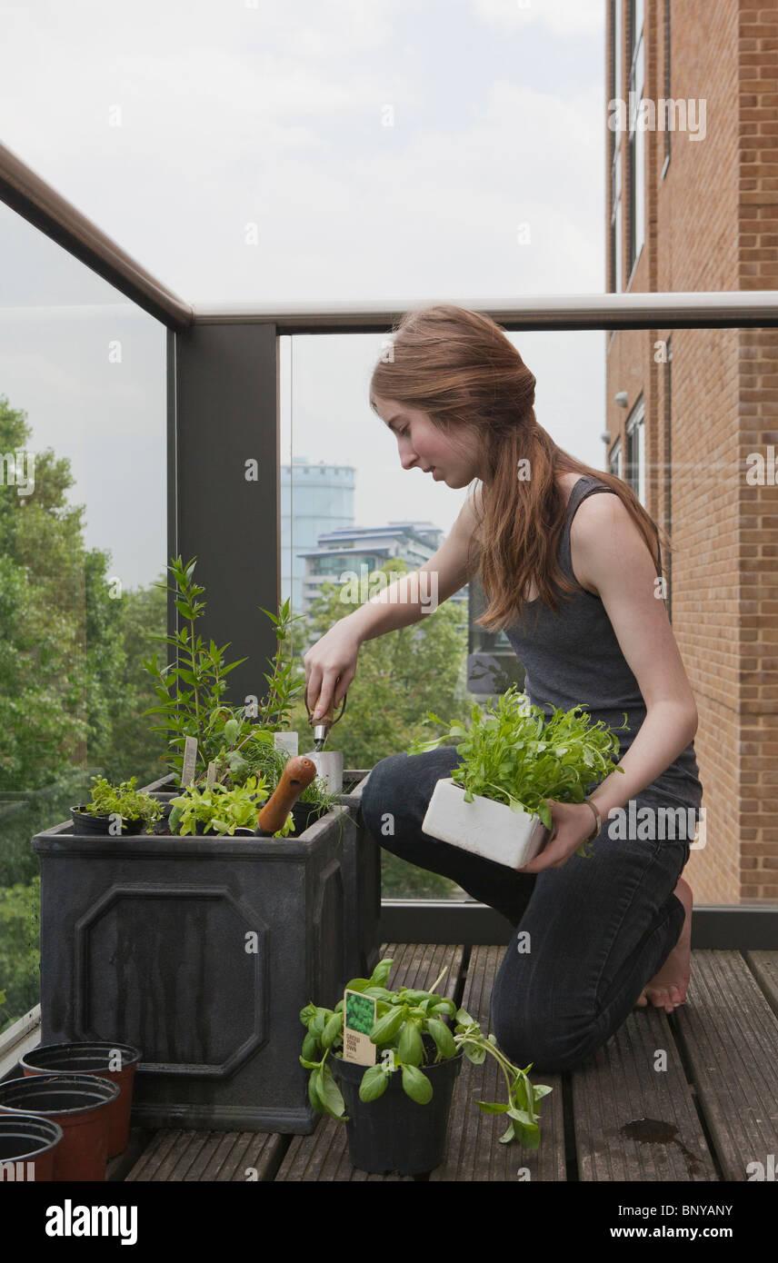 Young woman gardening on balcony - Stock Image