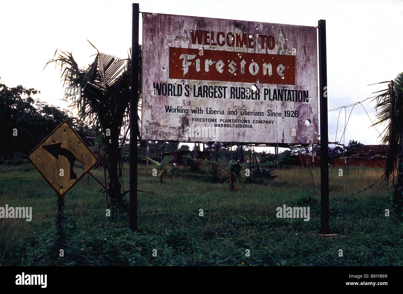 Abandoned rubber plantation in Liberia owned by Firestone - Stock Image
