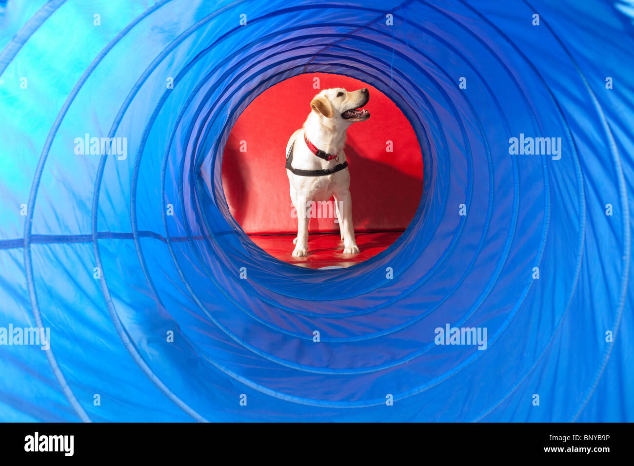 Trained dog for Assisted therapy - Stock Image