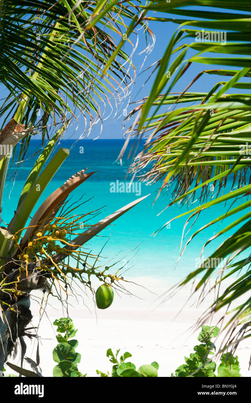 View through palm trees onto Pink Sand Beach, Harbour Island, Bahamas. - Stock Image