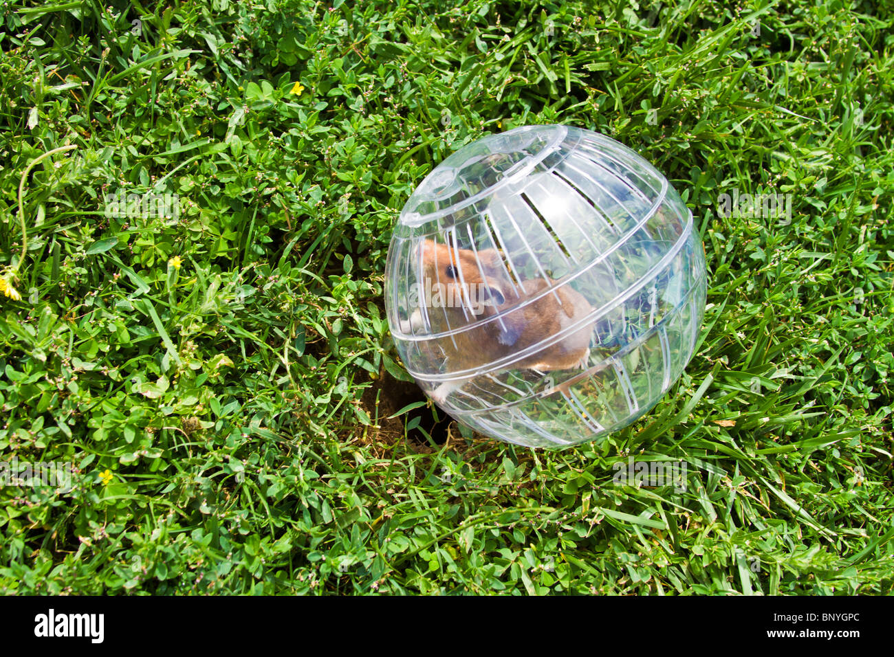 hamster ball game pc download