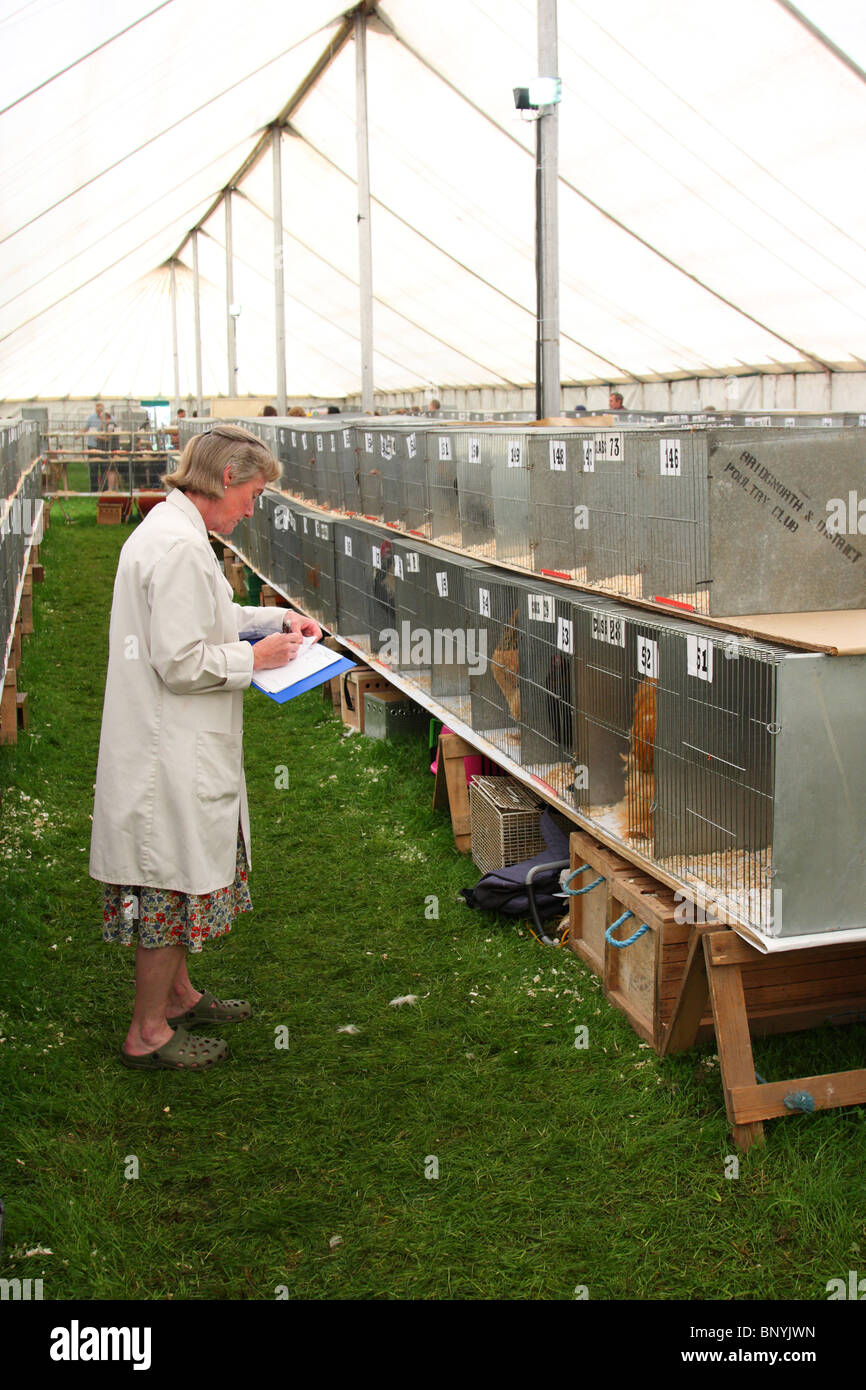 Judging poultry at the Bakewell Show, Bakewell, Derbyshire, England, U.K. - Stock Image