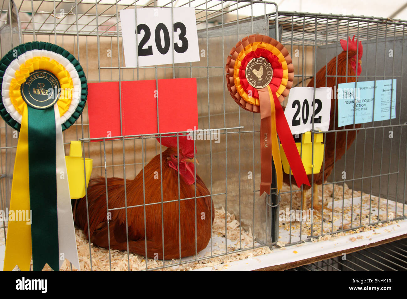 Poultry at the Bakewell Show, Bakewell, Derbyshire, England, U.K. - Stock Image