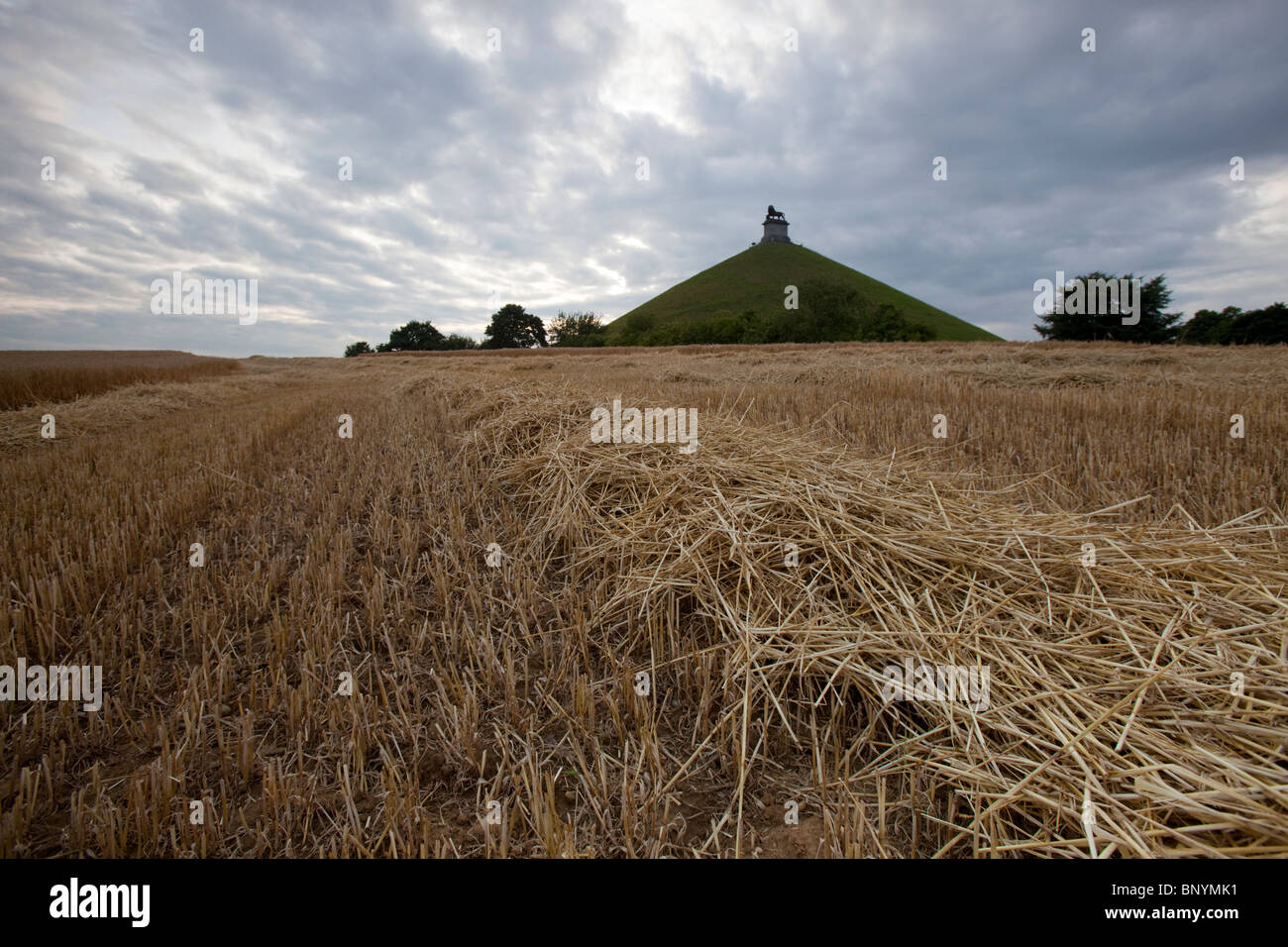 Wide angle shot of dry stalks of freshly cut barley with the Lion Mound monument showing in the background, Waterloo, - Stock Image