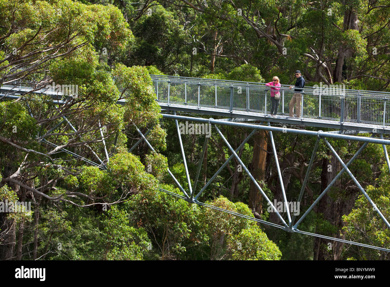 The Tree Top Walk in the Valley of the Giants.  Walpole-Nornalup National Park, Western Australia, AUSTRALIA. - Stock Image