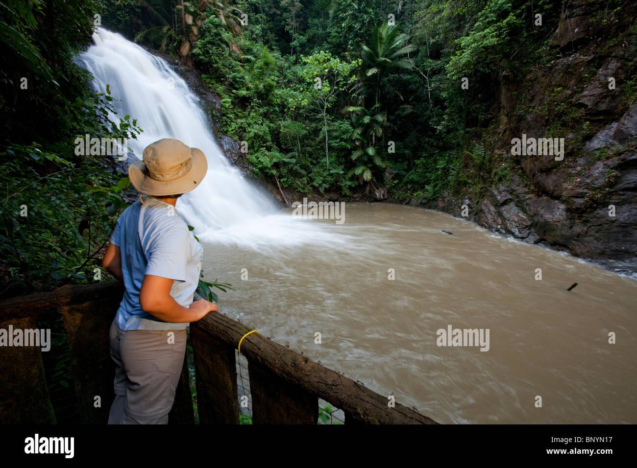 Female tourist watching the upper Kota Tinggi waterfall at the Gunung Panti Recreational forest cascading down. Stock Photo