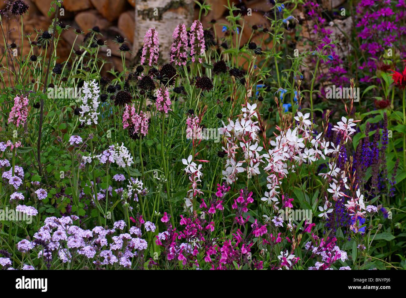A colourful mixed flower border with Gaura lindheimeri Stock Photo