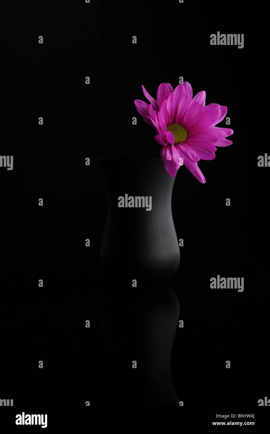 magenta on black - Stock Image