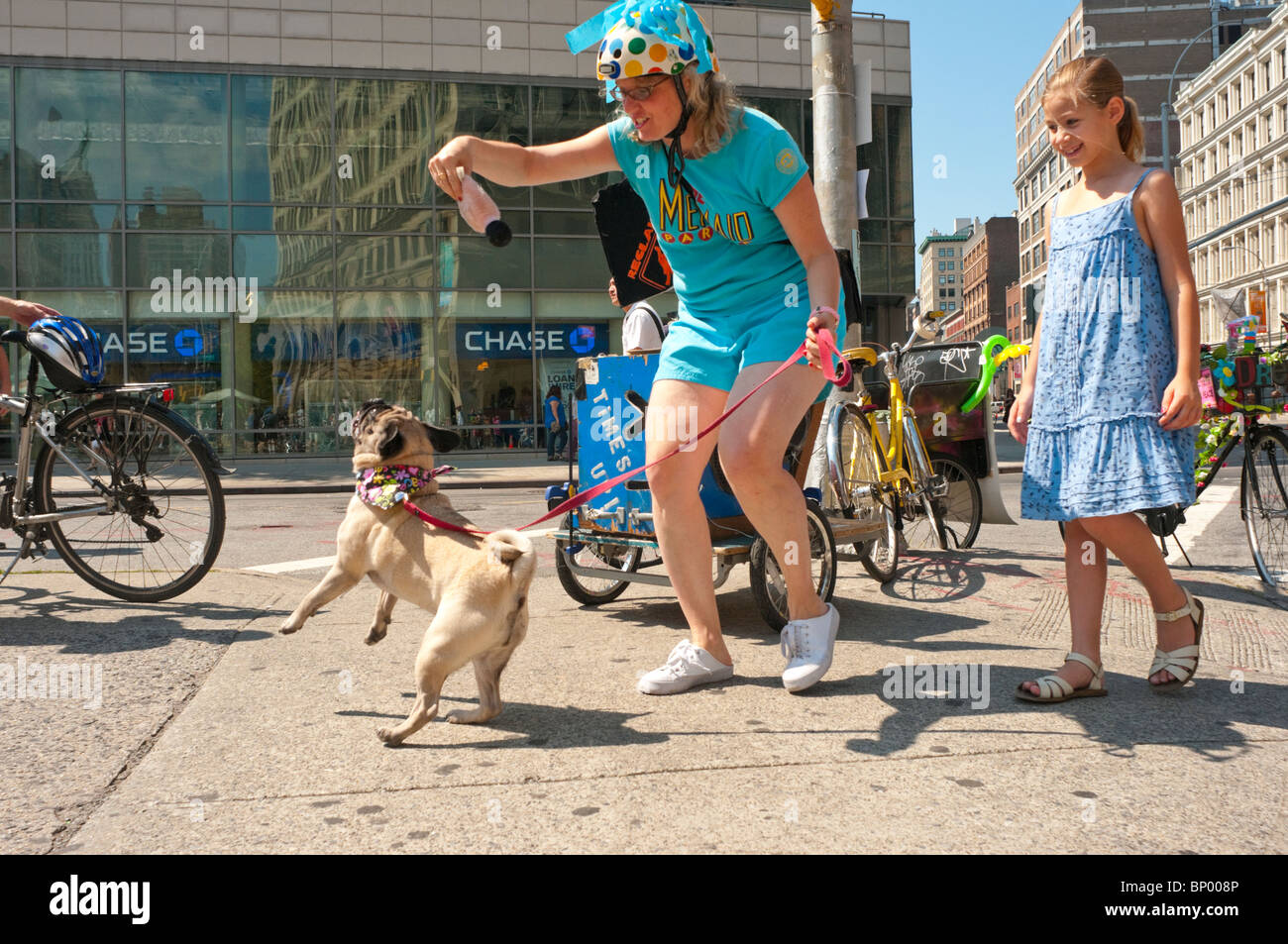 New York, NY - 7 August 2010- Olive the Pug and her guardian dance at the Times-Up space during Summer Streets. - Stock Image
