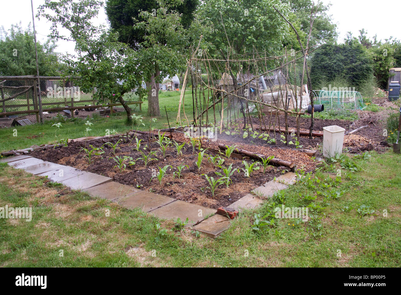 Traditional vegetable or kitchen garden, Hampshire, England. - Stock Image