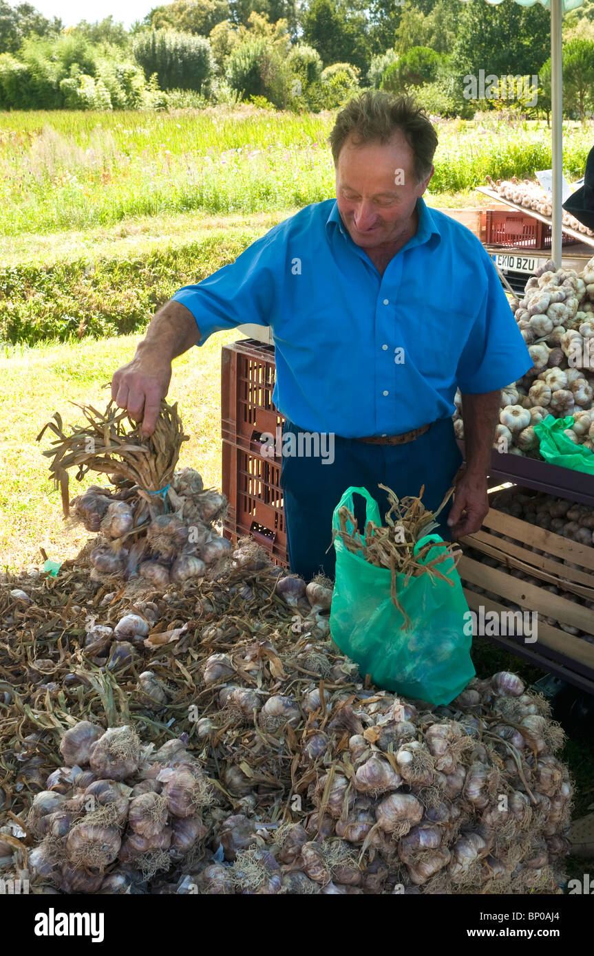 Frenchman on market stall with bunches of violet garlic - France. - Stock Image