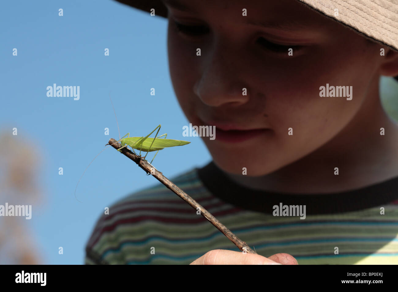 India, Kerala, Periyar National Park. A young boy observes a cricket on a twig. (MR) - Stock Image