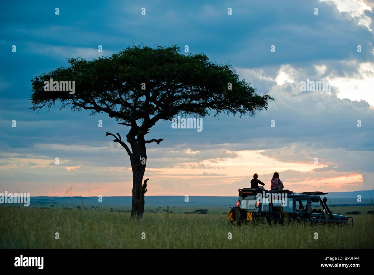 Kenya, Masai Mara. A pause for a sundowner beneath a balanites tree during a game drive on a family safari. (MR) - Stock Image