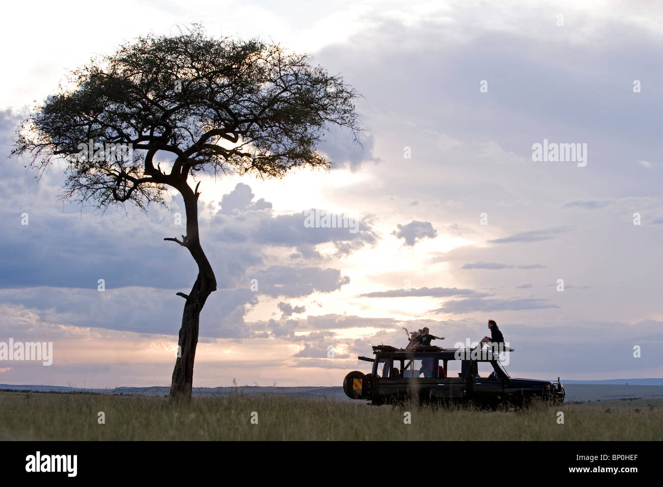 Kenya, Masai Mara. A stop for a break in a game drive beside one of the Mara's classic balanites trees. (MR) - Stock Image