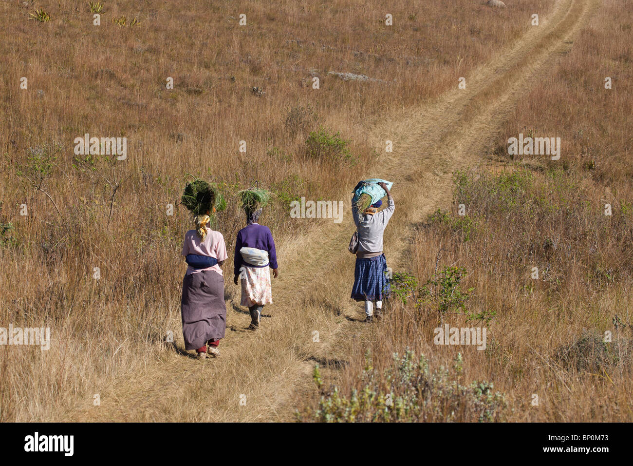 Women Carrying Hay on their Heads, Malolotje Reserve, Swaziland - Stock Image