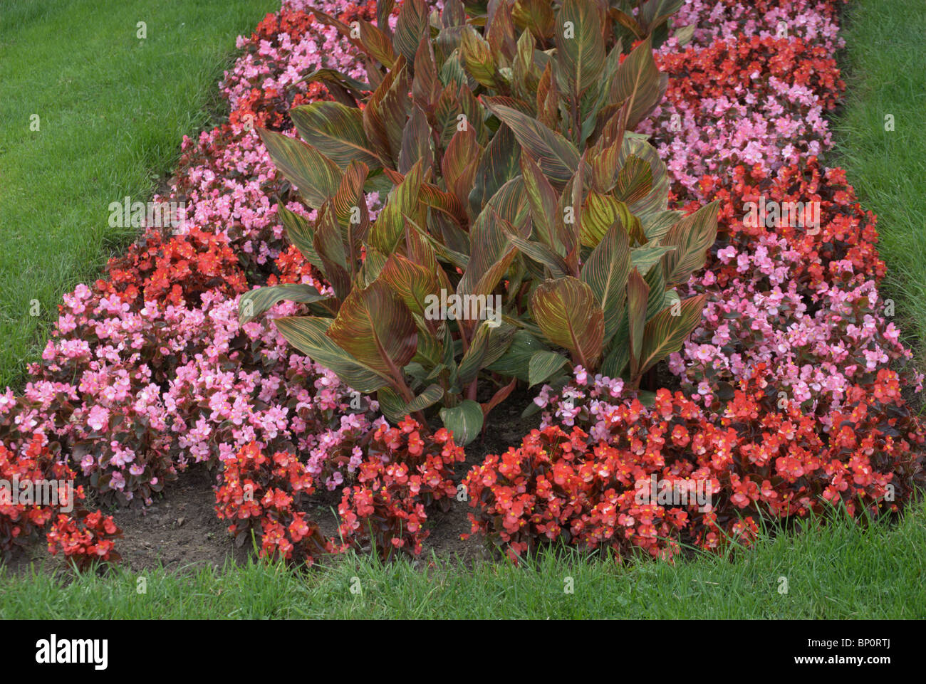 flower bed garden at highland park, rochester ny stock photo