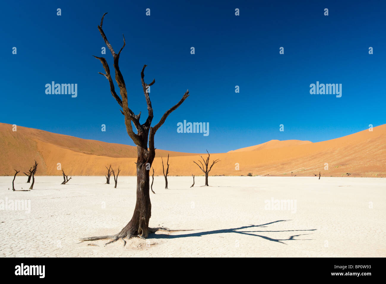 Dead Vlei at Sossusvlei landscape with dead Acacia trees and red sand dunes Namib Naukluft Park Namibia - Stock Image