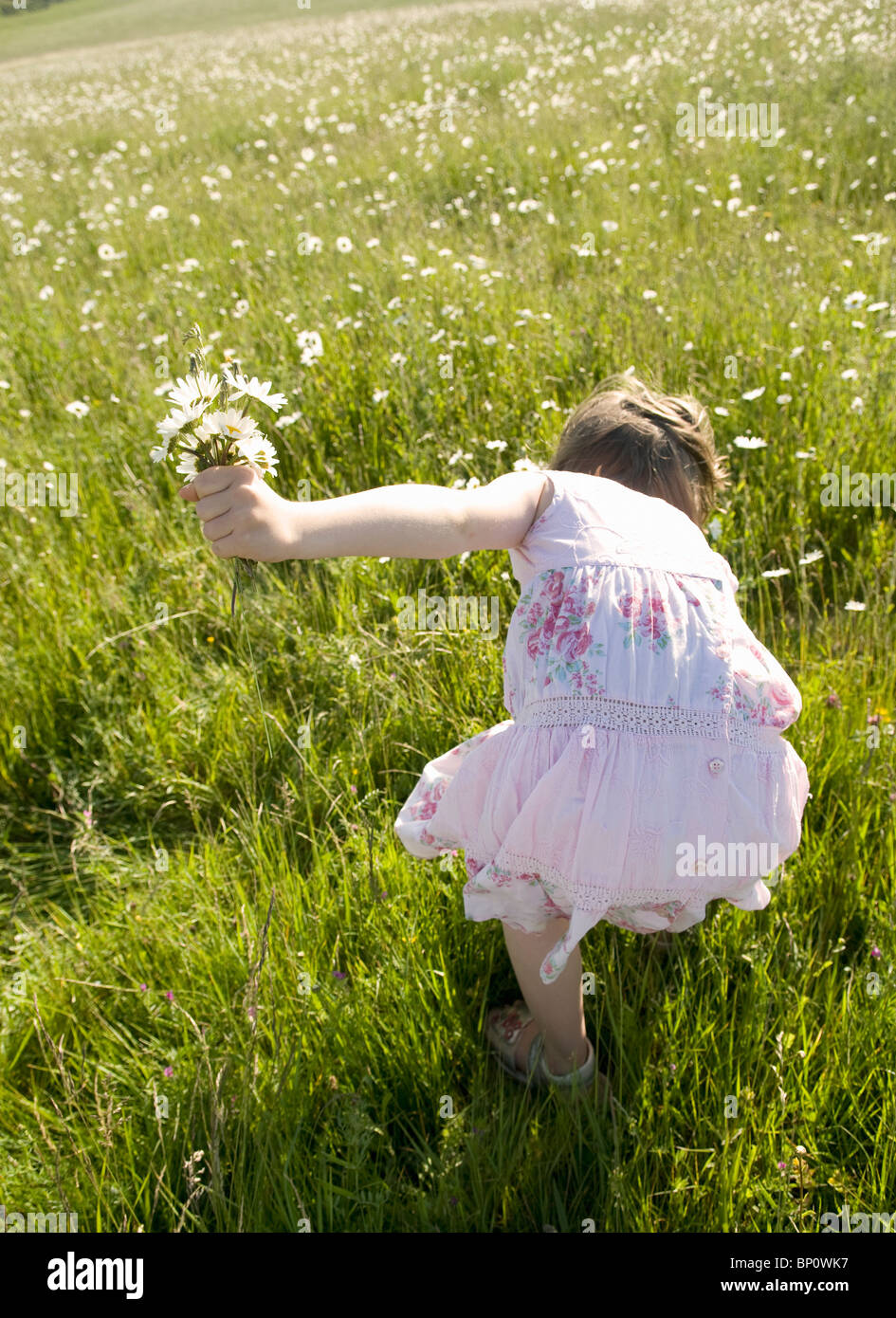 Girl picks wild flowers in meadow - Stock Image