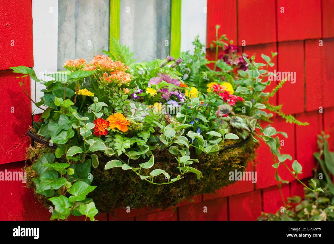 Flowers in Window Box - Stock Image