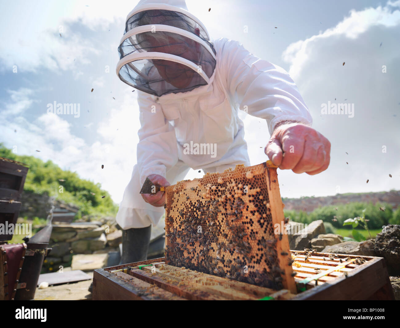 Beekeeper inspects bee hive - Stock Image