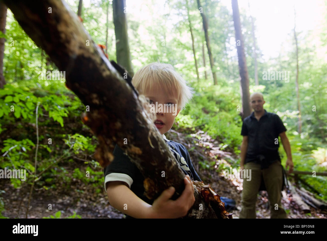 Boy carrying a limb in a forest - Stock Image