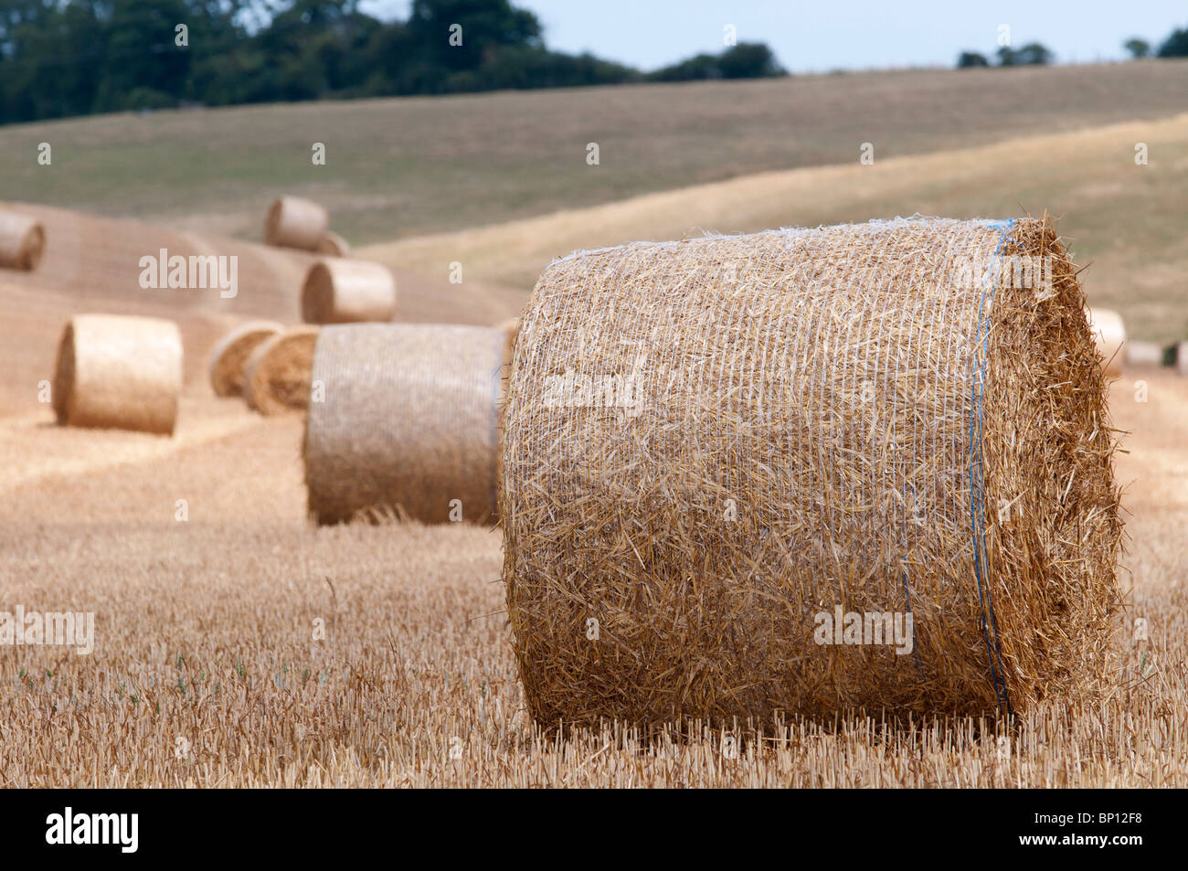 hay bails  in field north downs way kent countryside kent england - Stock Image