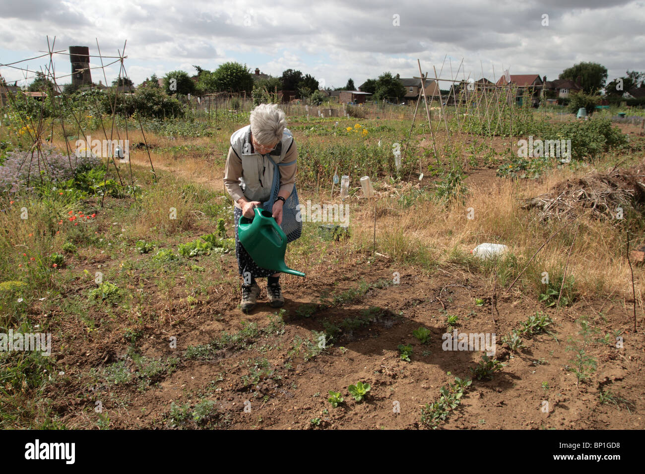 Elderly woman watering plants - Stock Image
