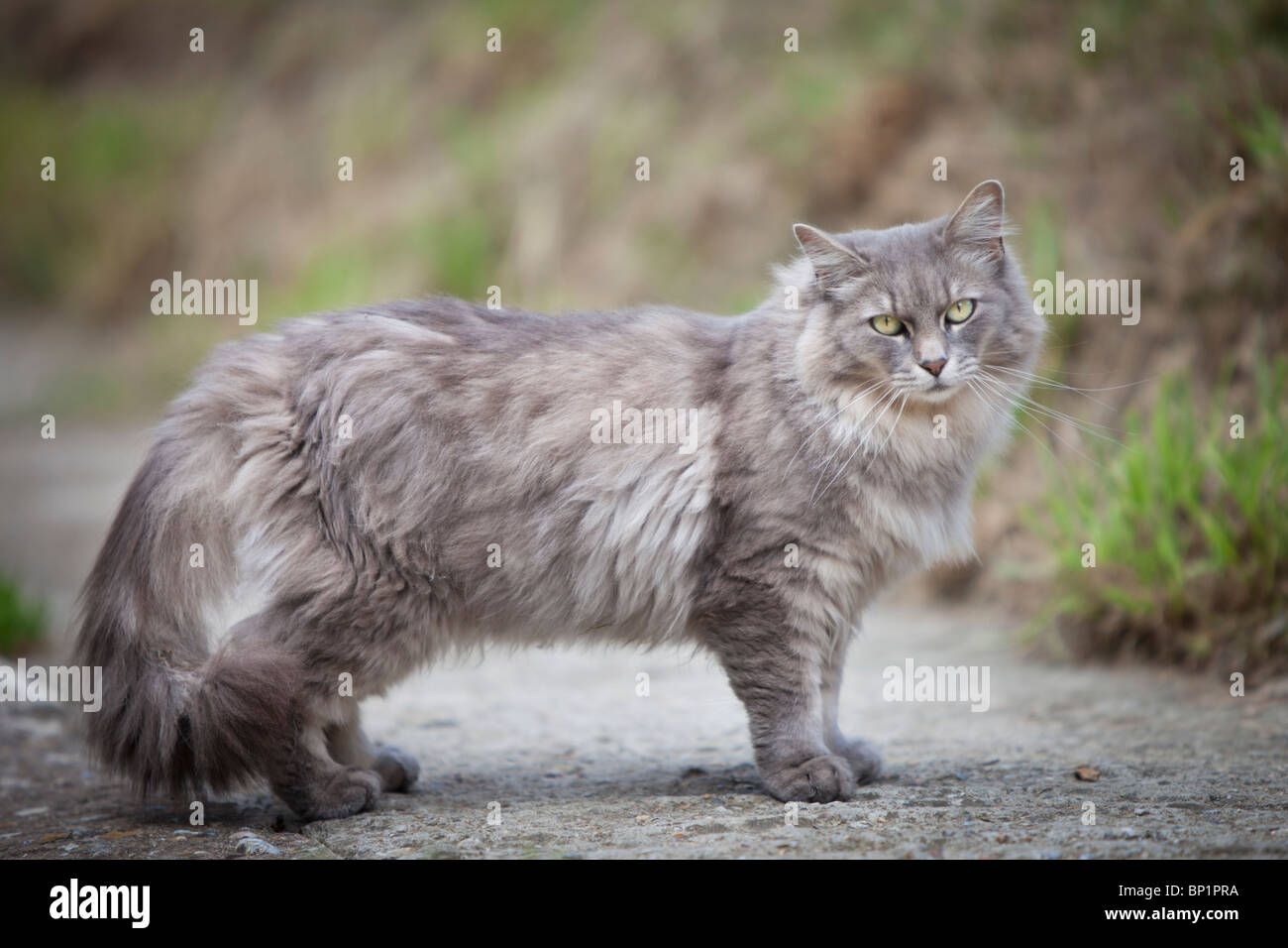 Light Grey Cats Eyes Stone