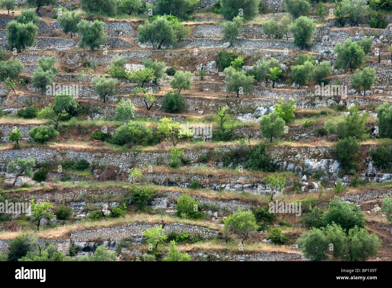 Terraced Hillside in Puglia, Italy - Stock Image