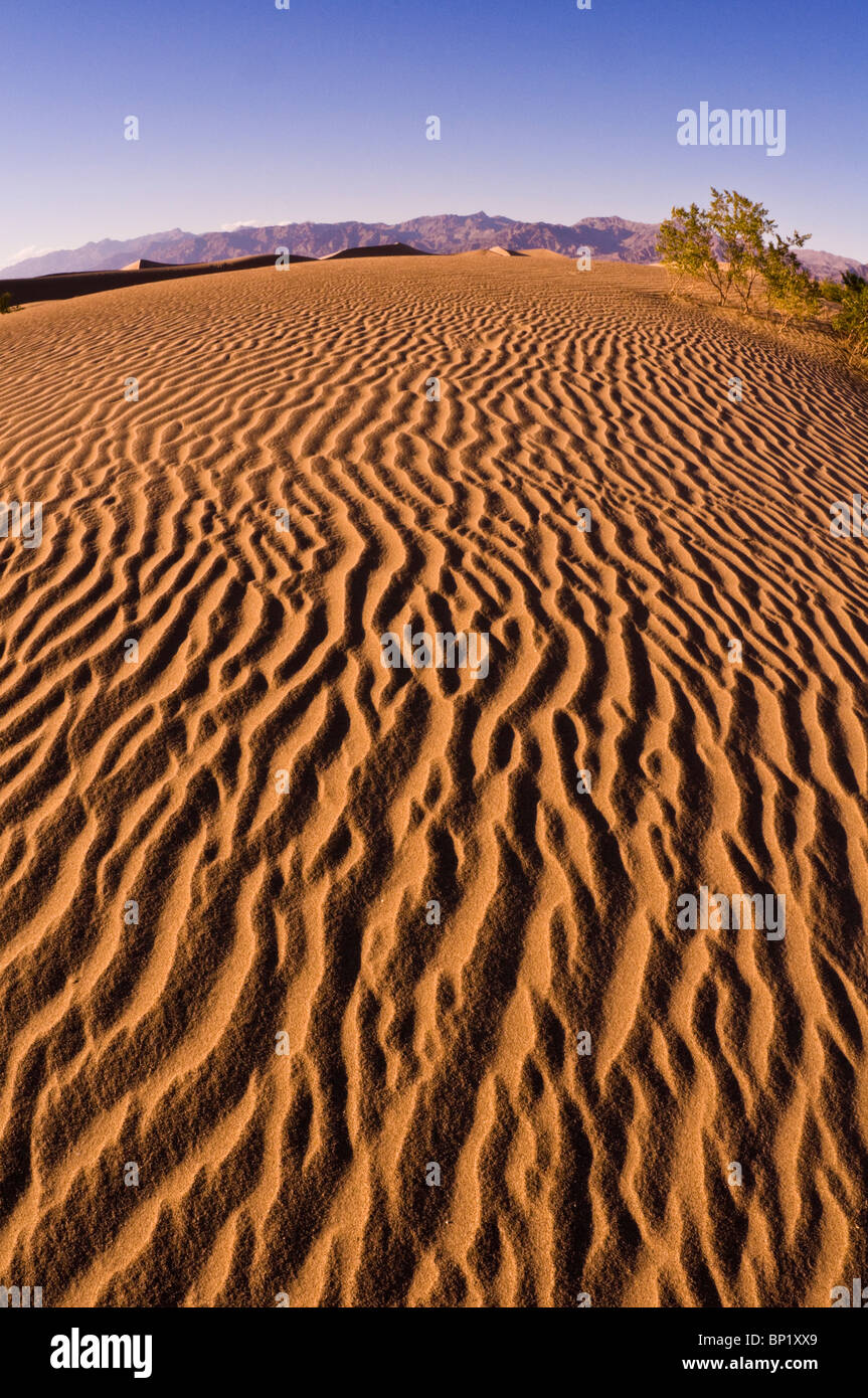 Evening light on dune patterns, Mesquite Flat Sand Dunes, Death Valley National Park. California - Stock Image