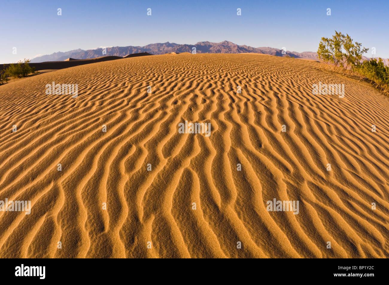 Evening light on dune patterns, Mesquite Flat Sand Dunes, Death Valley National Park. California - Stock Image