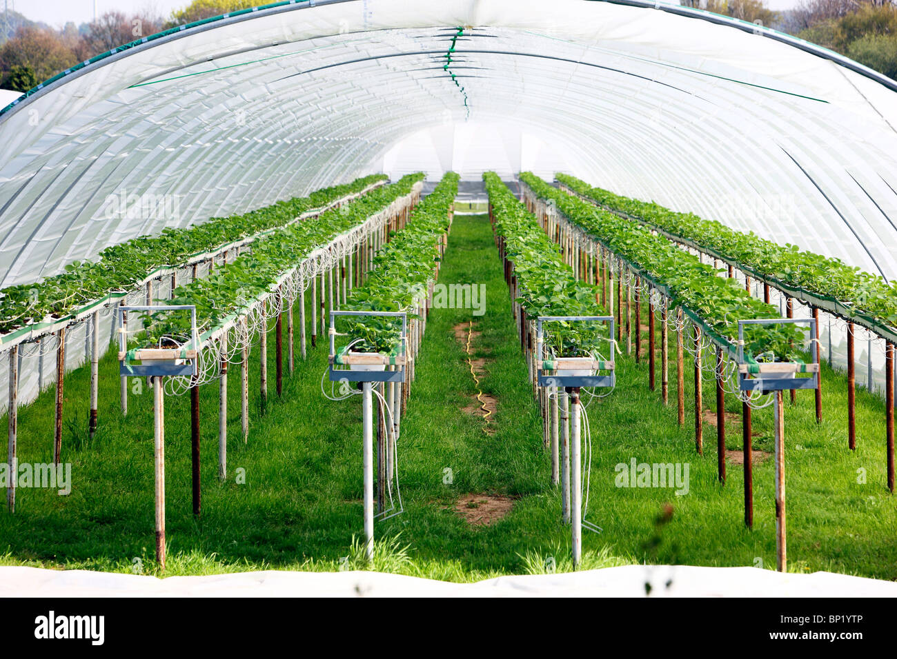 Greenhouse, for growing plants. - Stock Image