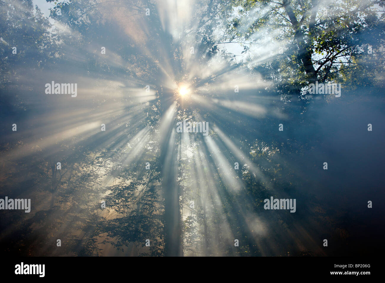 Smoke in a forest, sun comes slowly through the fume. - Stock Image