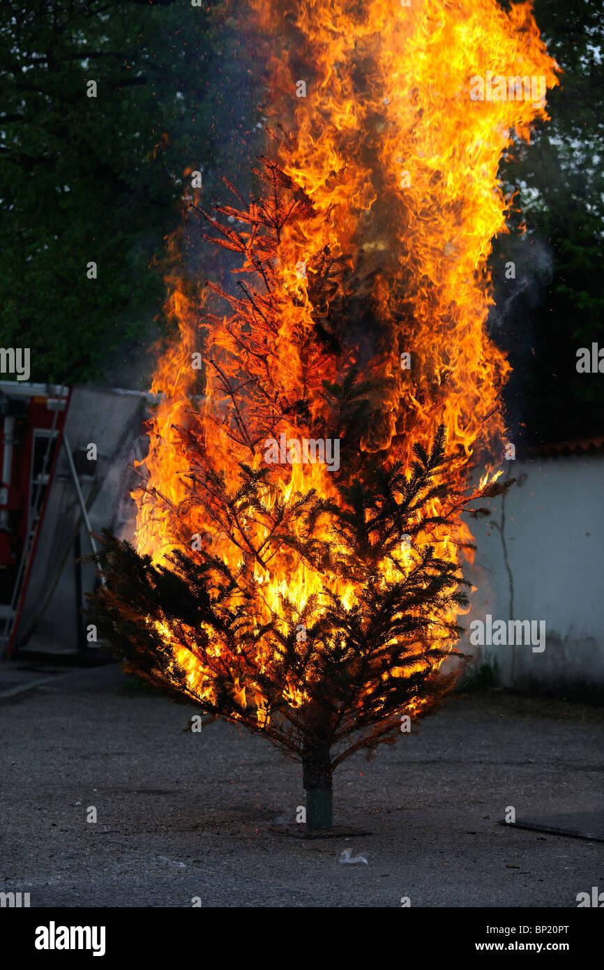 Burning Christmas Tree.Burning Christmas Tree Sequence From The Beginning Till