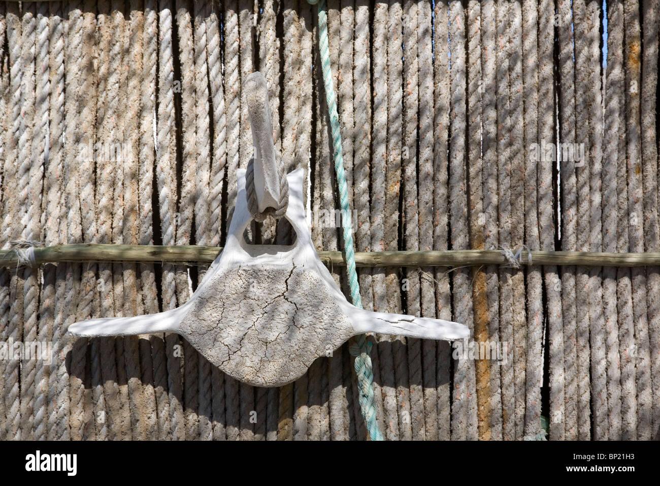 Whalebone vertebra hanging against rope background - Lüderitz  - Namibia - Stock Image