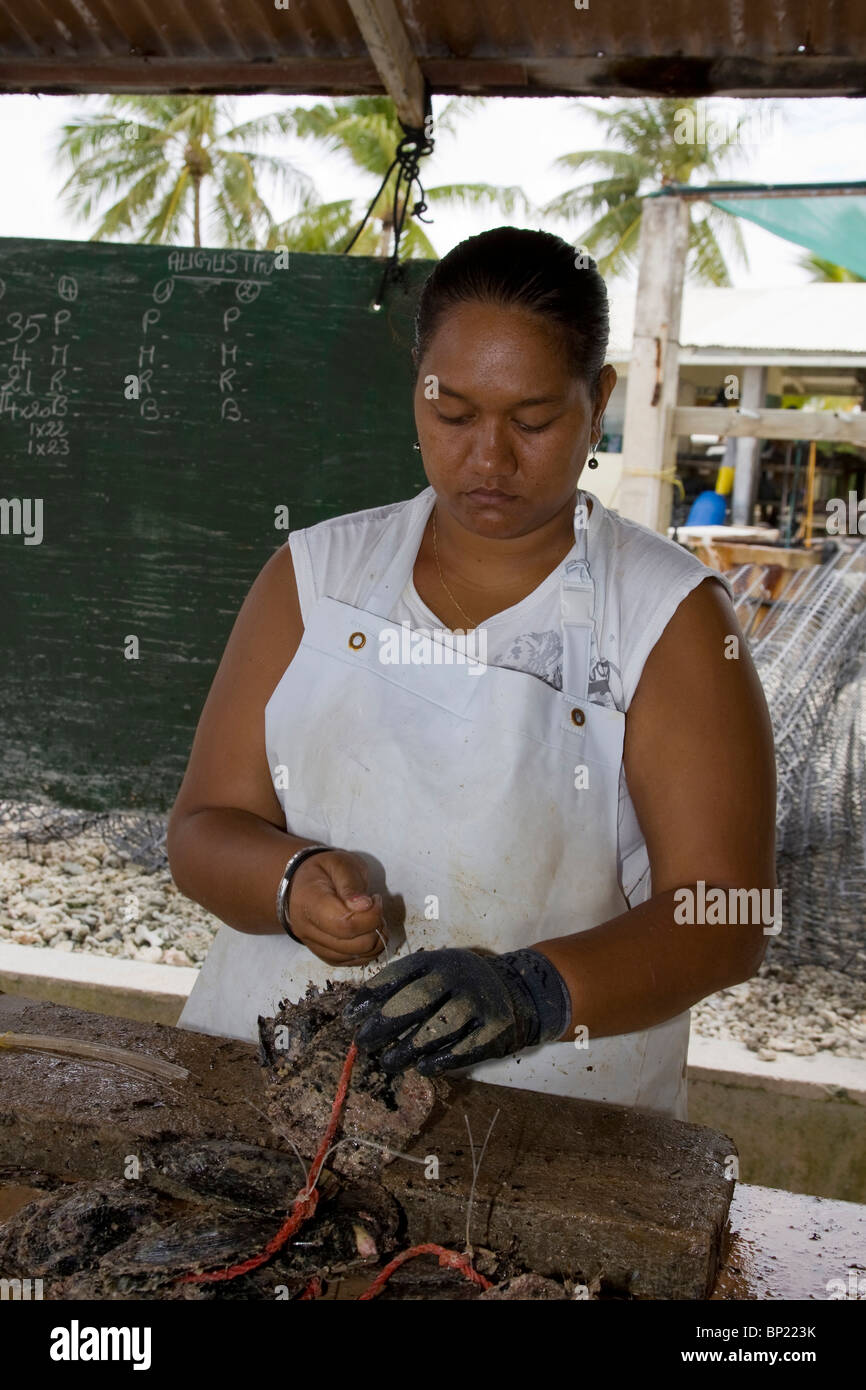 Preparing of Oysters at Pearl Farm, Rangiroa, French Polynesia - Stock Image