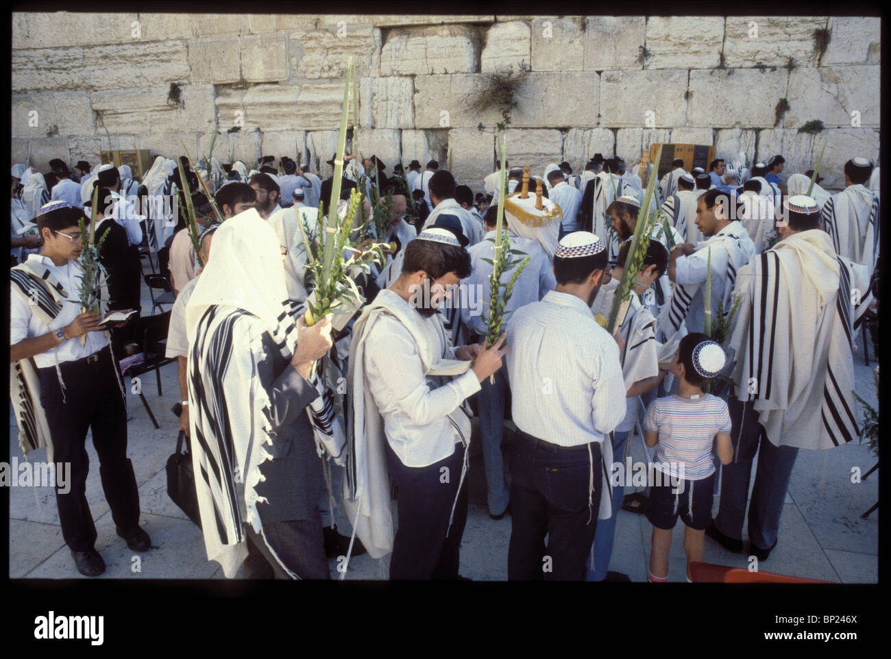 425. PRAYING AT THE WESTERN WALL WITH THE FOUR SPECIES DURING THE FEAST OF SUKKOT (TABERNACLE) - Stock Image